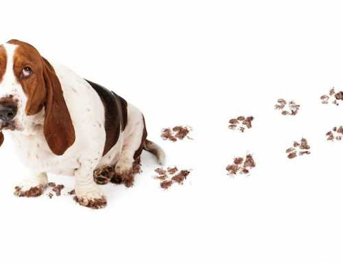 Professional New York Cleaning Service On How To Get Rid Of Pet Odor